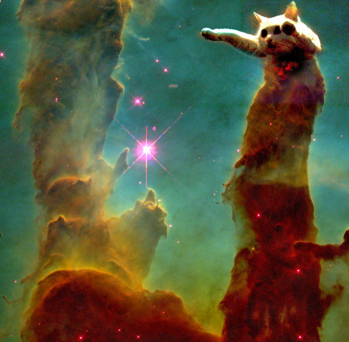 Cat Gif Space