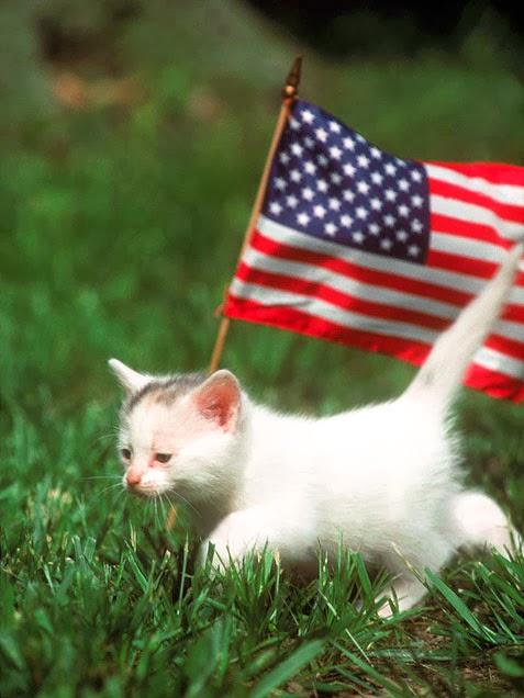 Amerikanische Raubkatze