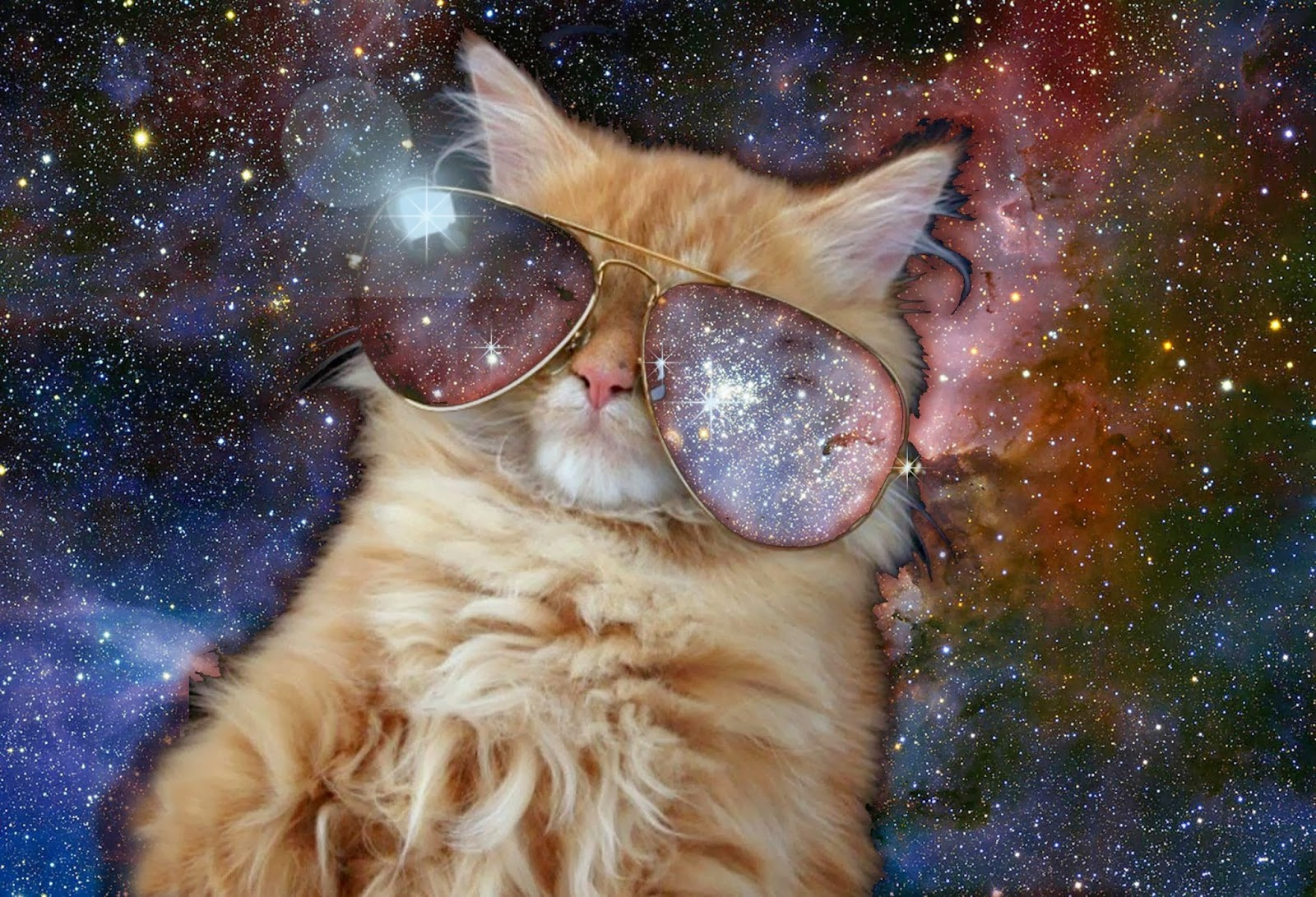 Cats in space caterville - Space kitty wallpaper ...