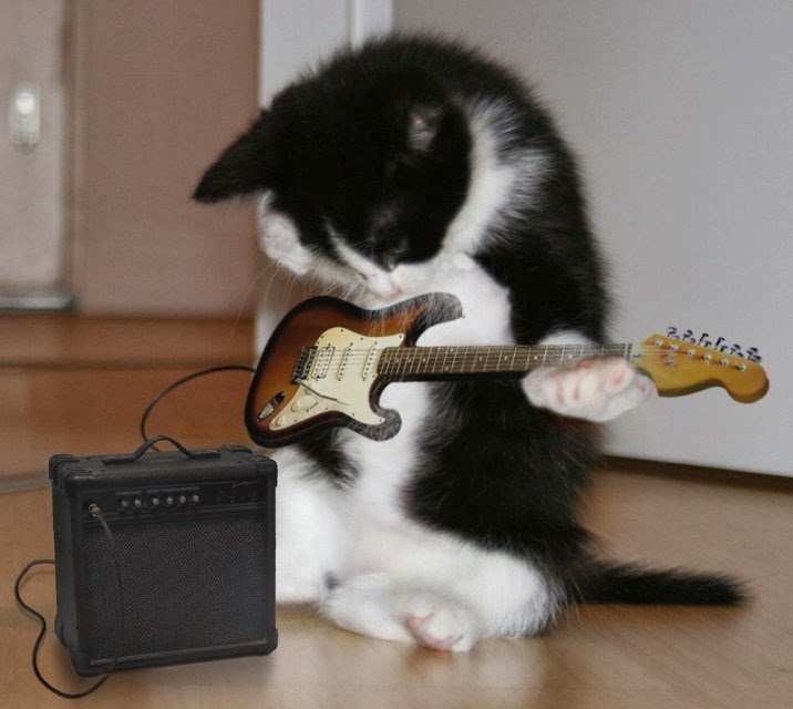 da903-guitarcat3.jpg